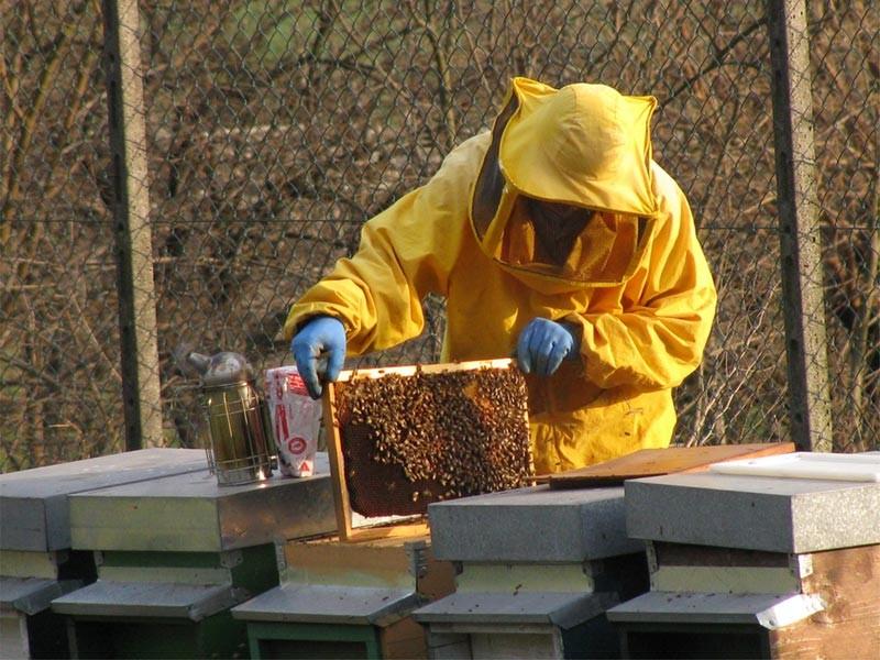 Da Regione Veneto oltre 390 mila euro per l'apicoltura