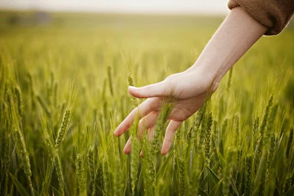 Agricoltura sociale in Veneto, Regione istituisce gruppo di lavoro